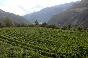 vignejards-Borgo-dei-Posseri