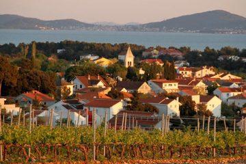Vines-near-Zadar