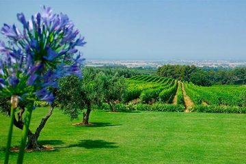 biserno-vineyards